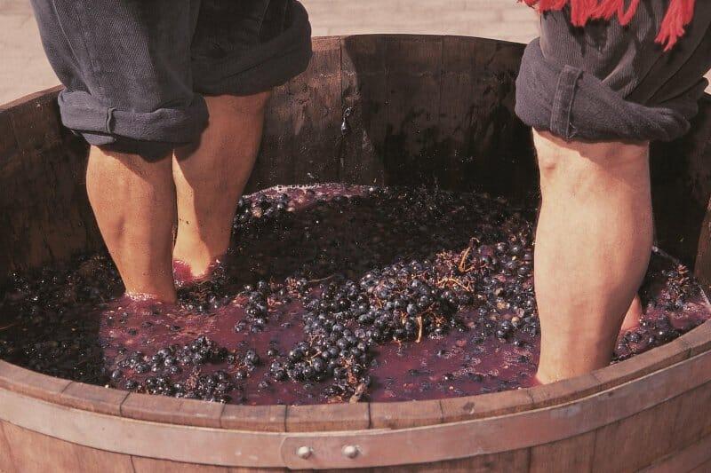 Vendimia en La Rioja: 6 planes de enoturismo irresistibles