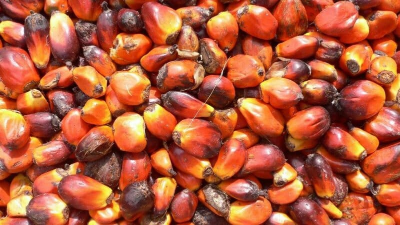 Todo sobre el aceite de palma