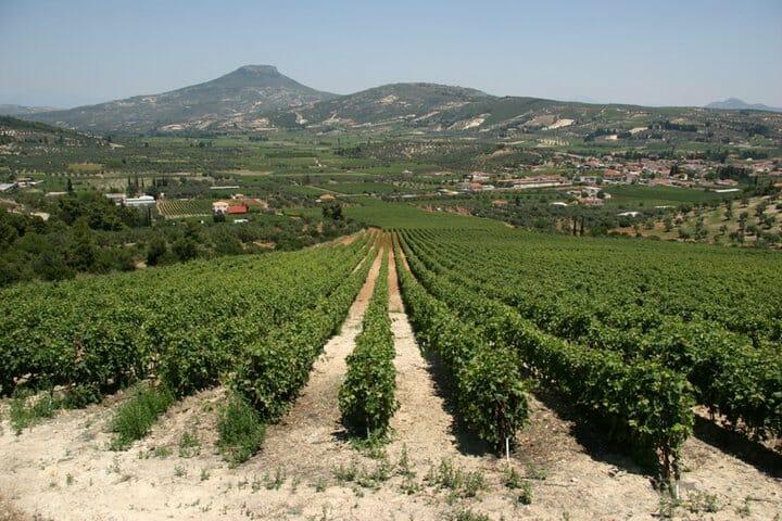 Nemea, tierra llena de vino