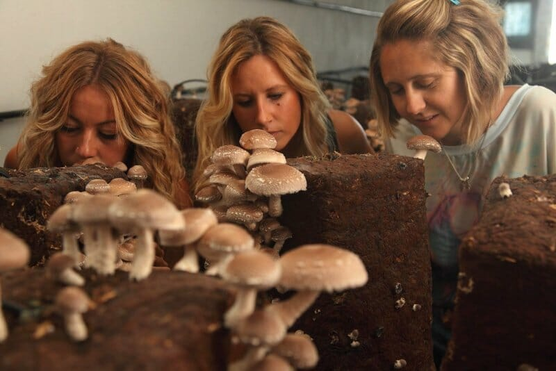 Fungitur, la fiesta de los champiñones y las setas de La Rioja