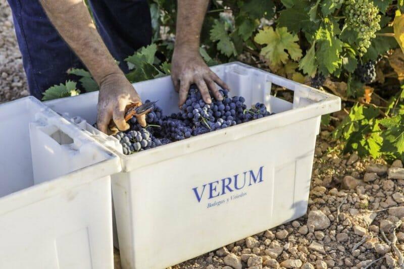 Todo sobre la vendimia: conoce, de una vez por todas, cómo se hace el vino