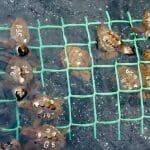 Proyecto de recuperación de la Tortuga Boba en Morro Jable