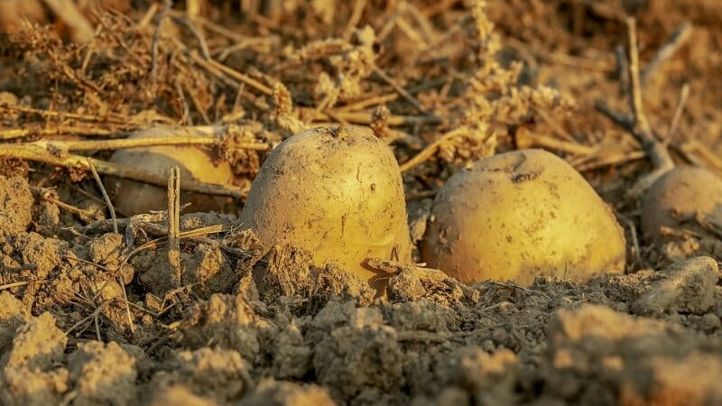 ¿Sabes cuál es la diferencia de nutrientes entre productos naturales y procesados?