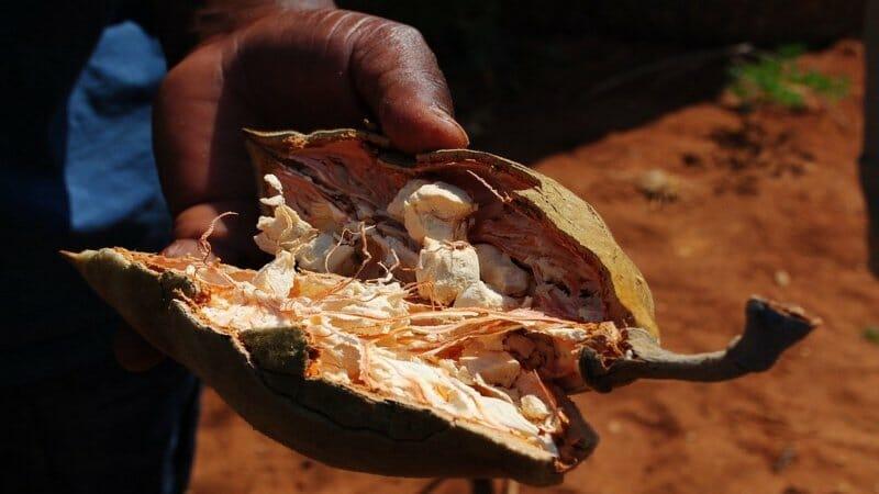 Camu Camu, Moringa y Baobab: los tres superalimentos de moda