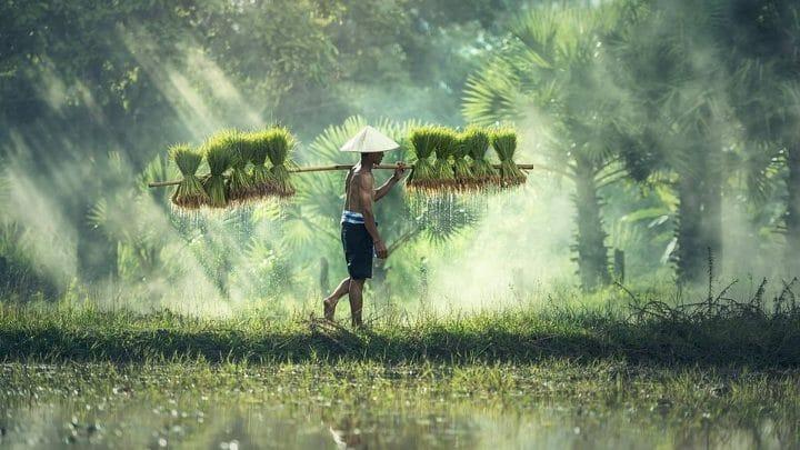 Malasia: la ruta de las especias