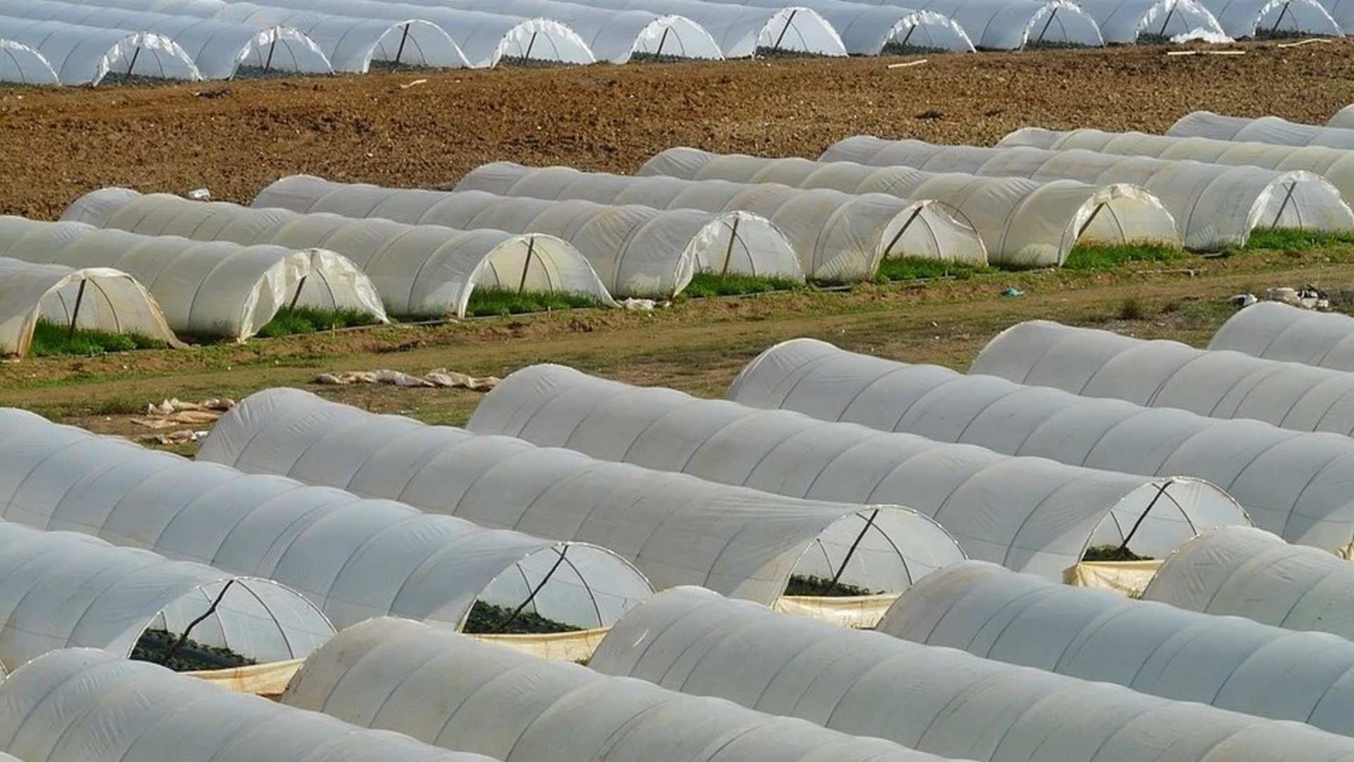 Los invernaderos de Almería y Granada: modelos de gestión en tiempos de pandemia