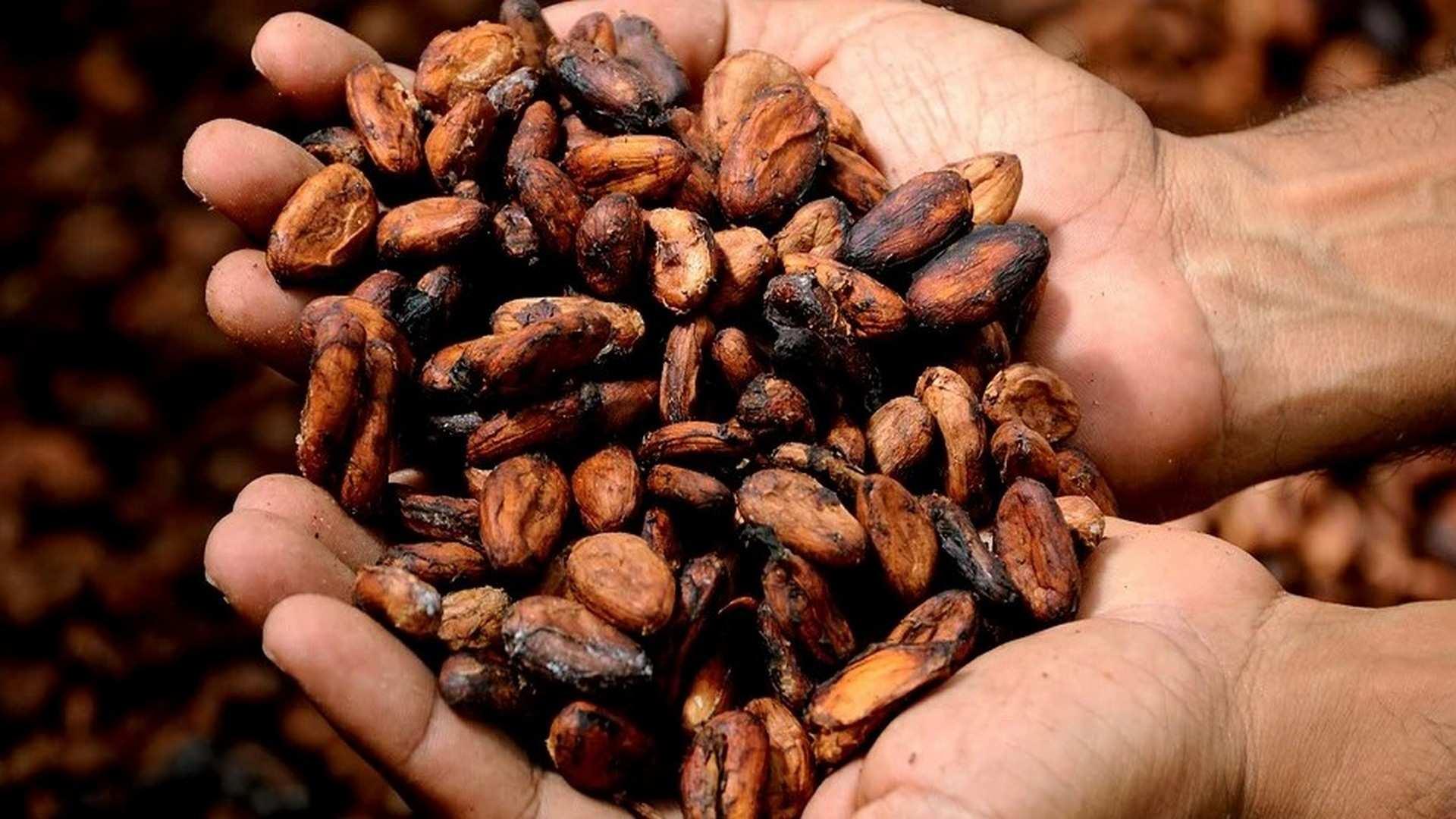 El cacao natural: un aliado inesperado para los estudios