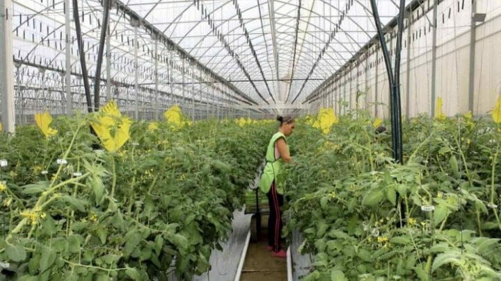 10 mentiras sobre los cultivos de invernadero