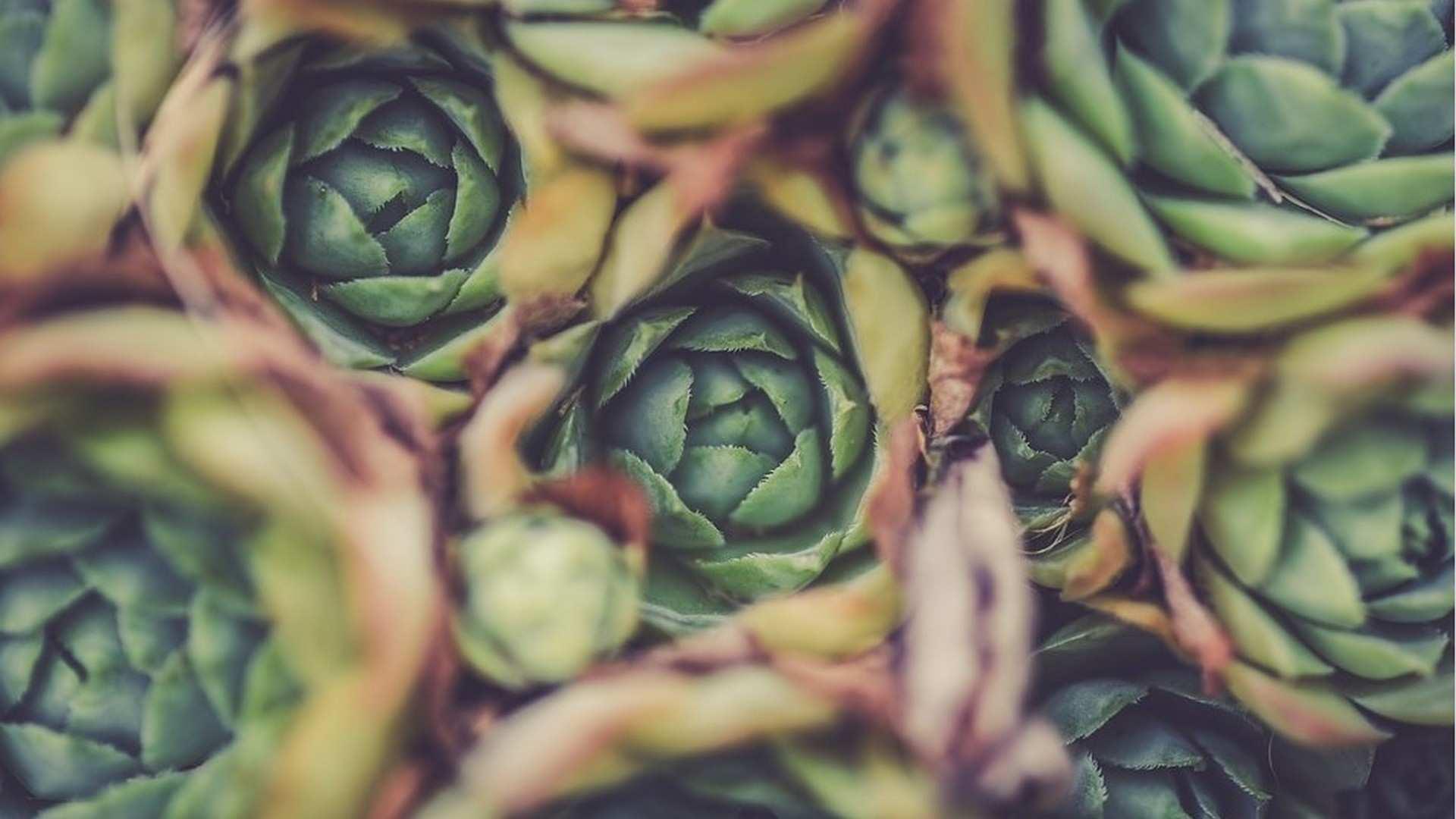 Beneficios y propiedades de la alcachofa