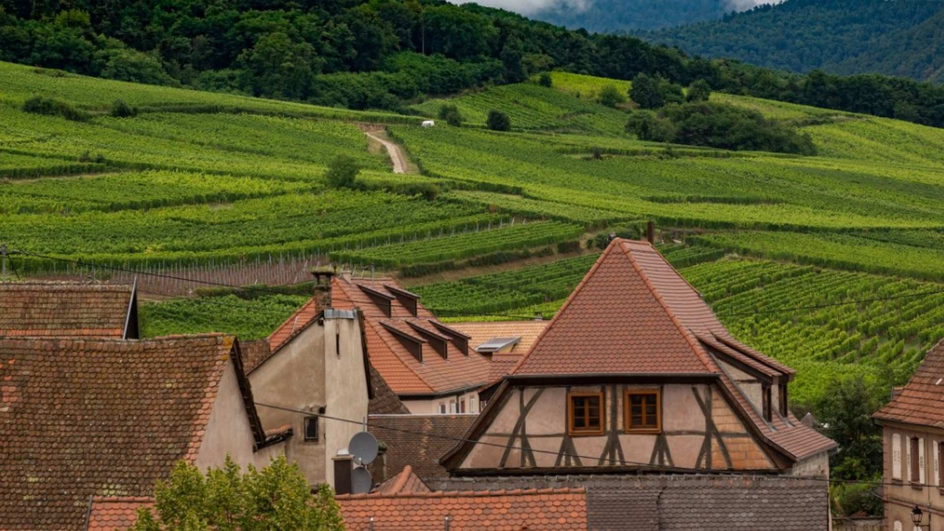 Los vinos de Alsacia: un viaje a través de los sentidos