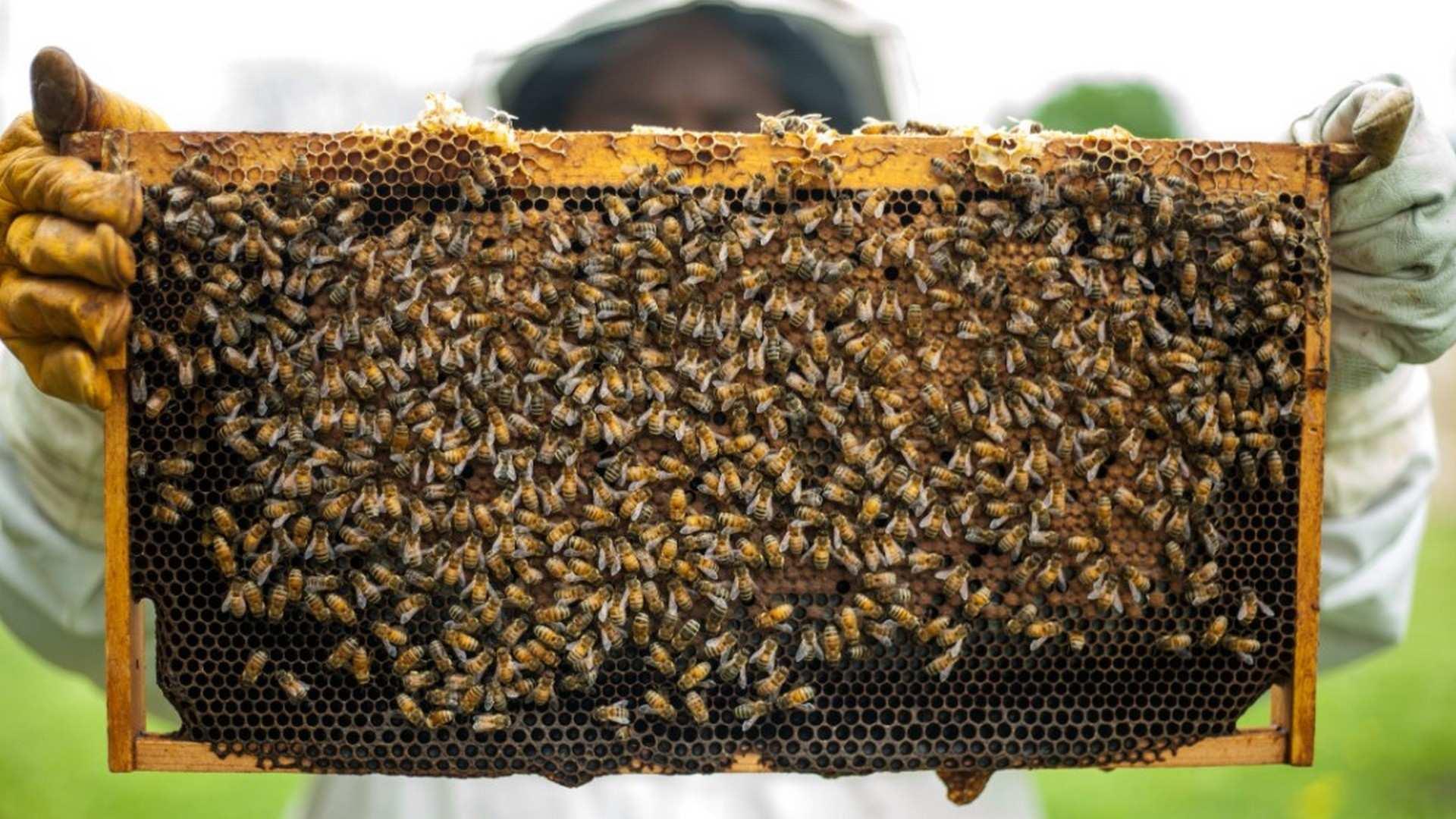 S.O.S: Salvemos la miel