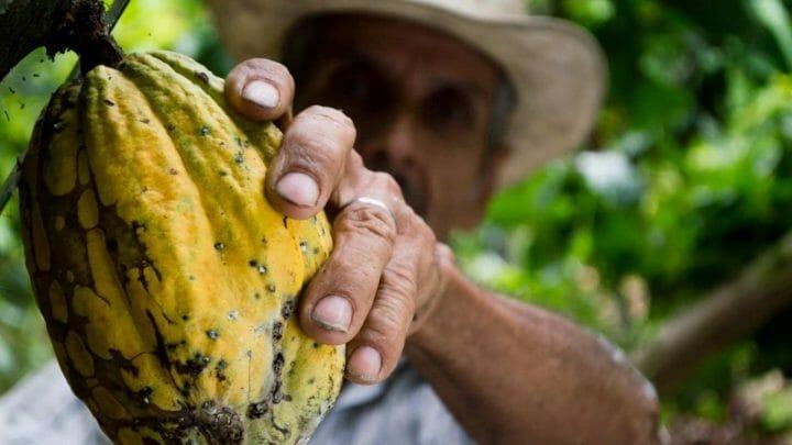 """Ecuador conquista con """"Puro Chocolate""""Ecuador conquista con """"Puro Chocolate"""""""