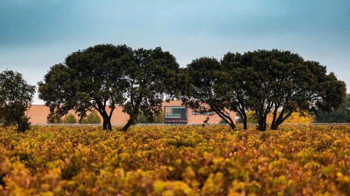 Bodegas Valtravieso, la excelencia del vino a 915 metros de altitud