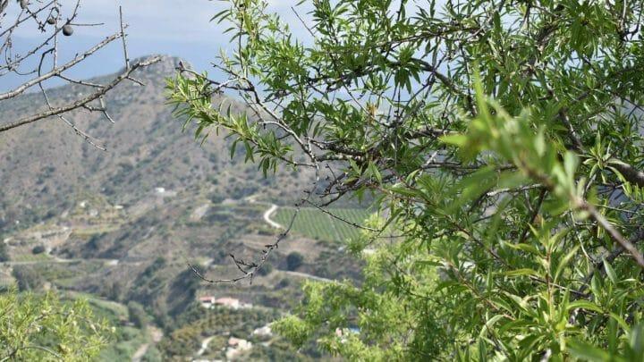 Qué ver y dónde comer en La Axarquía Malagueña
