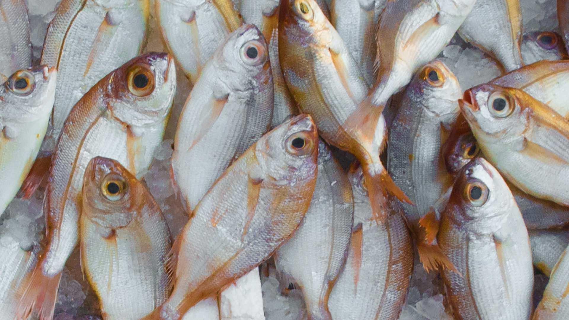 La OCU encuentra mercurio en pescados y mariscos