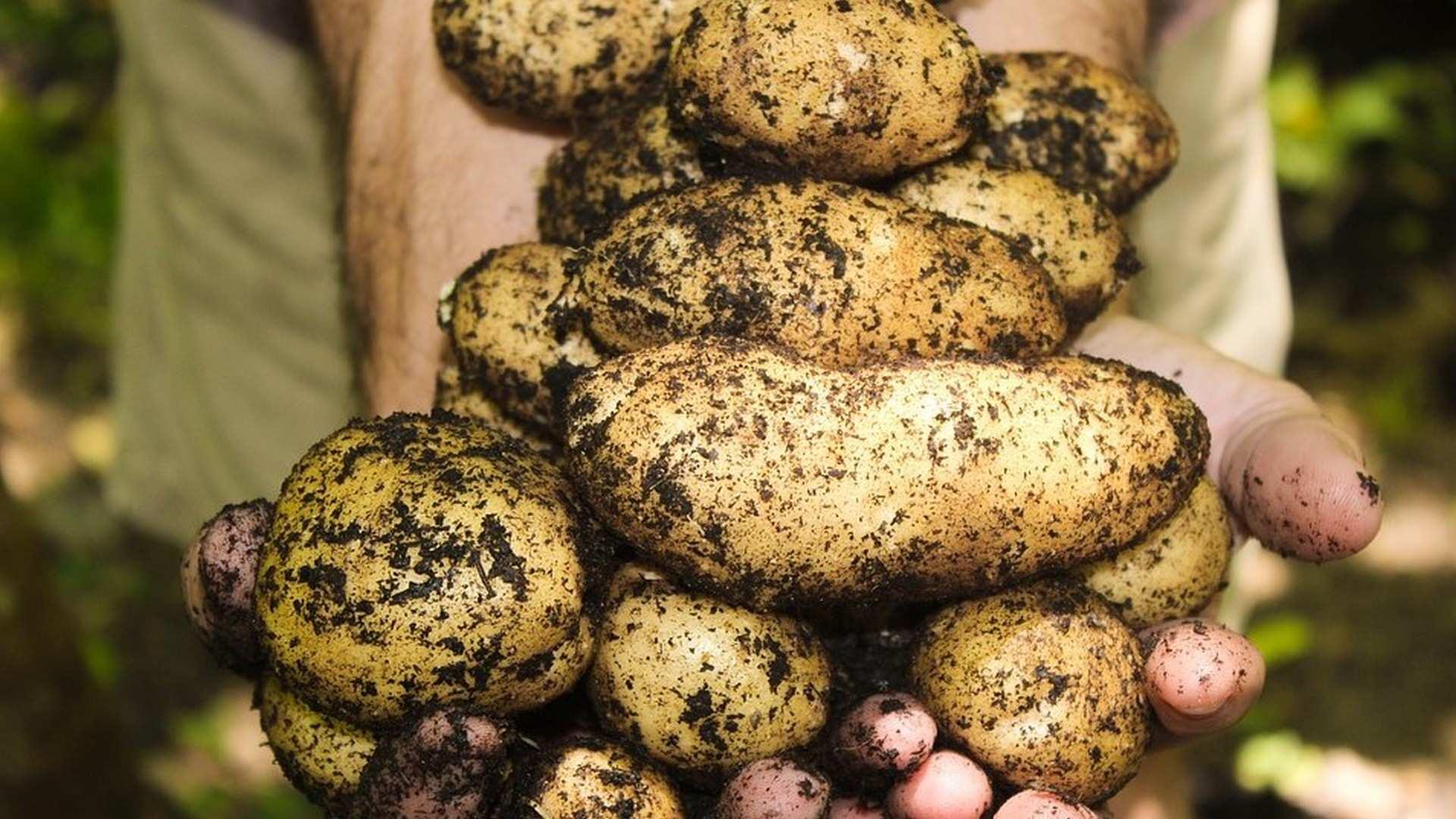 4 Trucos para conservar las patatas más tiempo