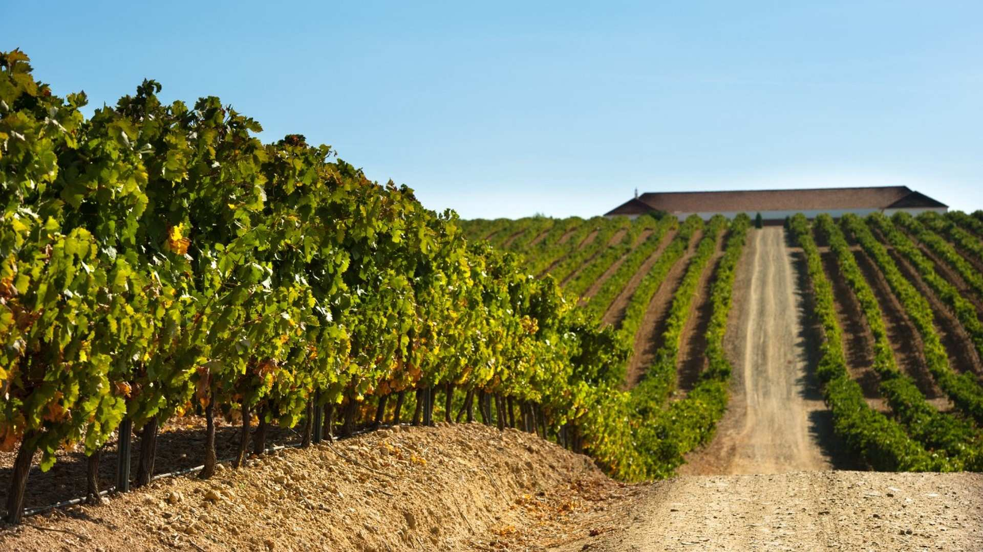 Almendralejo, tierra de vinos y cava 100% extremeños