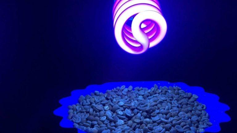 Lo último en desinfección de alimentos: La luz ultravioleta C
