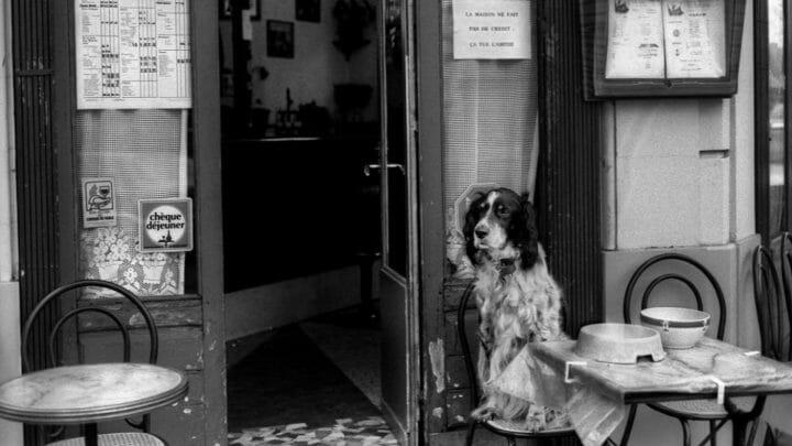 ¿Dónde puedo ir a comer con mi perro? 5 restaurantes Dog Friendly que no te puedes perder