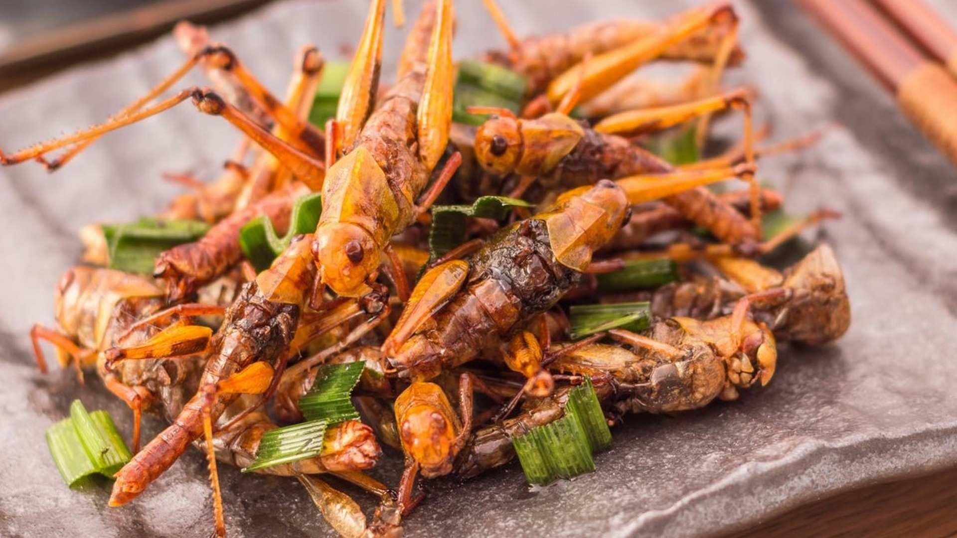 Los insectos, ¿el alimento del futuro?